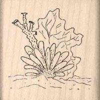 Coral Rubber Stamp