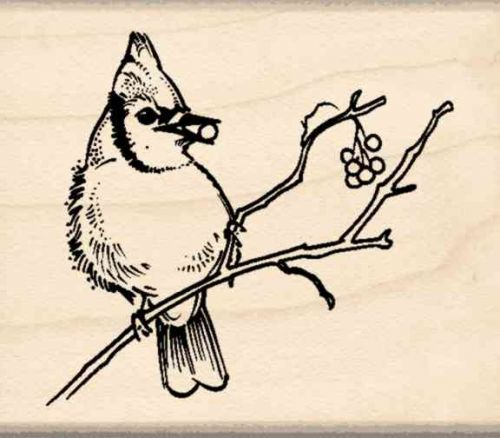 Blue Jay Rubber Stamp