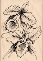 Orchids Rubber Stamp